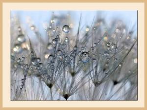Rain_Drops_028