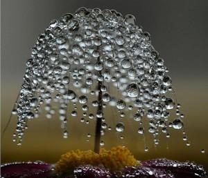 Rain_Drops_041
