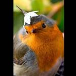 toi mon petit oiseau qui ne demandait qu'à vivre !