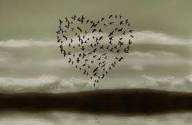 coeurs oiseaux