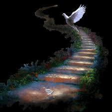 colombe volant